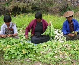 Bhutan: Women of the Dragon Kingdom (deel I)